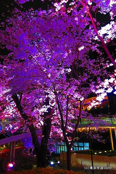 ミッドタウンで夜桜