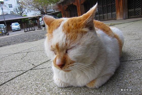 綱吉に庇護される猫