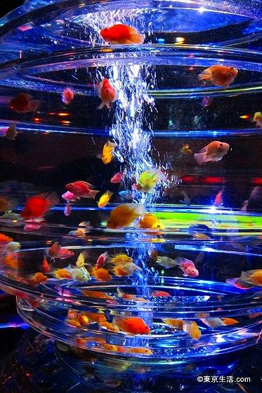 日本橋で金魚