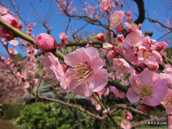もうすぐ春の新宿御苑