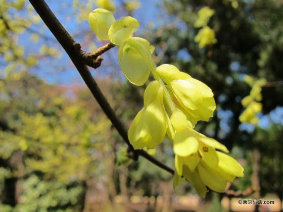 春の新宿御苑