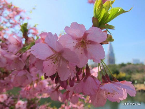 桜の季節の新宿御苑新宿御苑