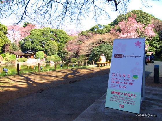 上野のカフェで桜