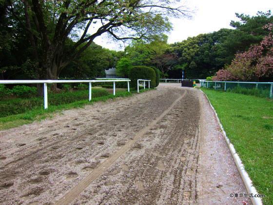馬事公苑の散歩