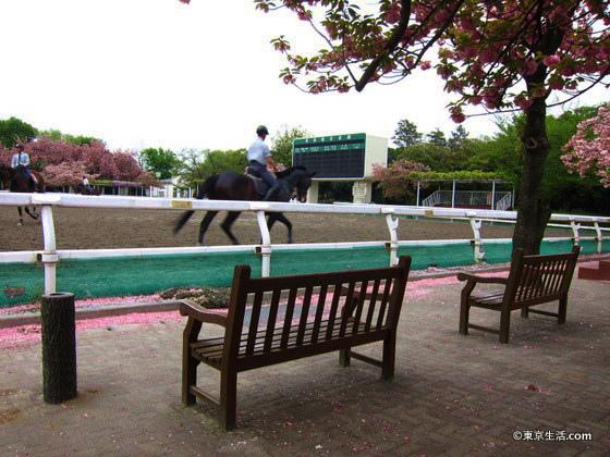 馬事公苑を散歩