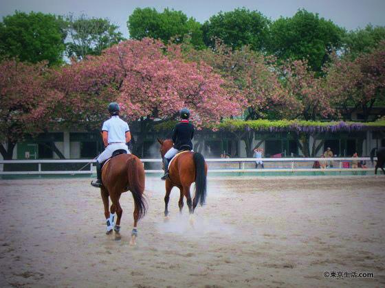 用賀の散歩|馬になりたくなる馬事公苑の画像