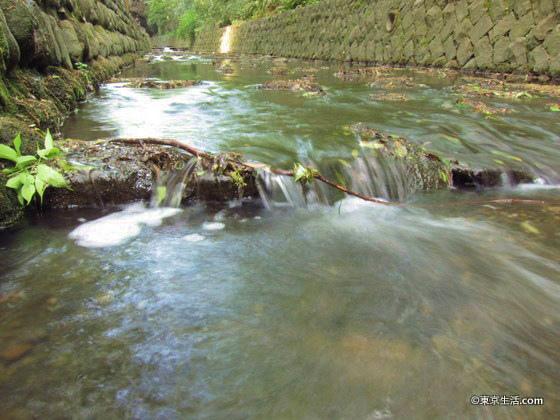 等々力渓谷の水の流れ