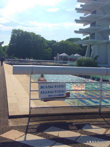 駒沢のオリンピック公園