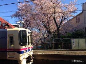 再び春を待ち焦がれる|東京の今