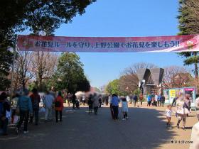 上野公園の桜の現状(3月27日)|東京の今