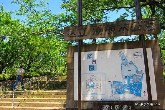 豪徳寺の散歩|初夏の羽根木公園が気持ち良すぎたの画像