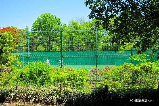 羽根木公園のテニスコート