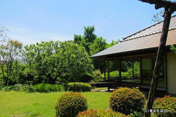 羽根木公園でお茶会