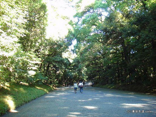 明治神宮の参道