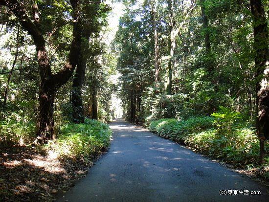 マイナスイオンが注ぐ明治神宮の森