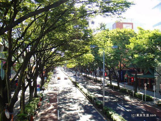 並木道の表参道