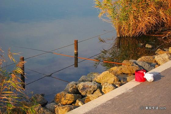 旧中川ではハゼが生息