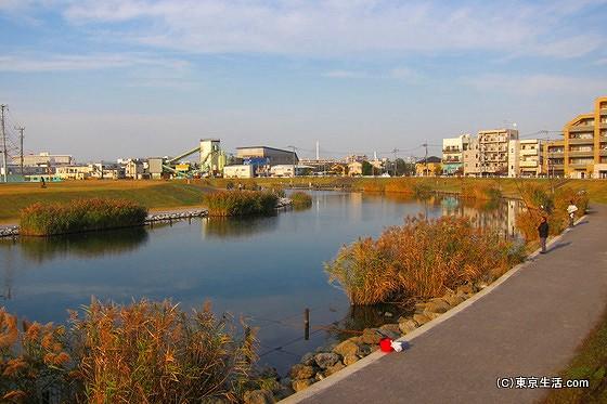 葦が生い茂る旧中川