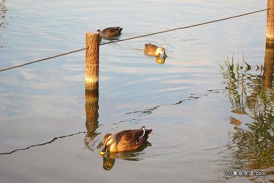 旧中川の水面
