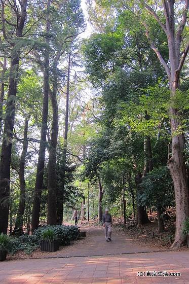井の頭公園の散策道
