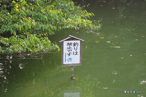 釣りが禁止の井の頭公園