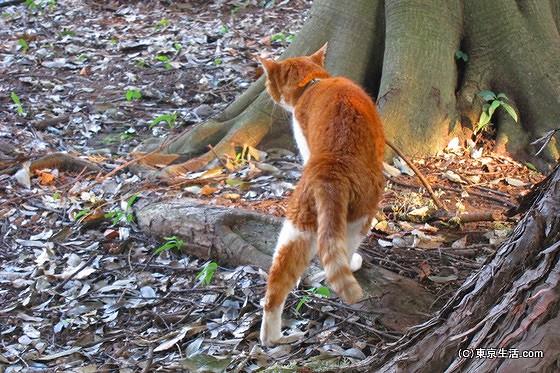 井の頭公園の猫