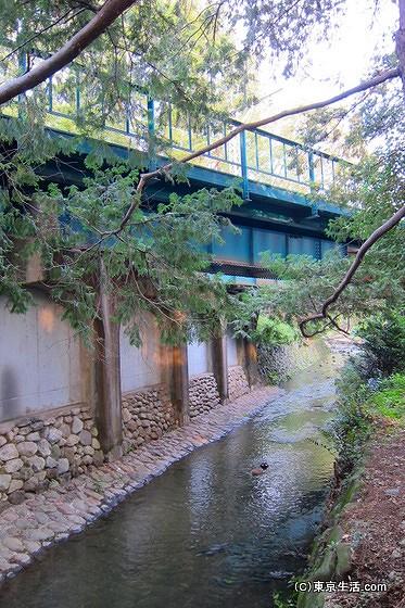 井の頭公園の小川