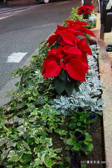 フラワーロードの赤い花