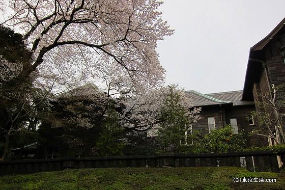 旧古河庭園と桜