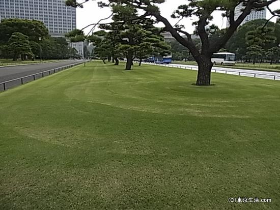 隣の芝生は青いのです