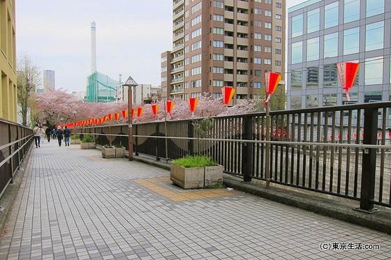 目黒川 桜並木の遊歩道