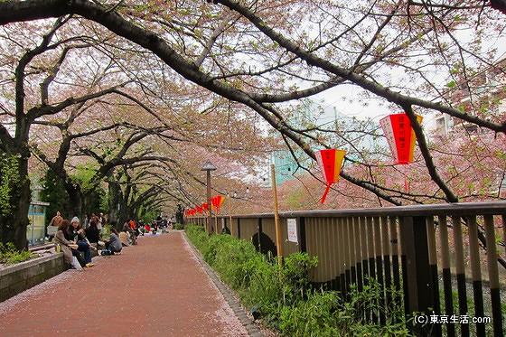 目黒川の桜でお花見