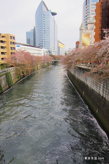 目黒駅付近の桜の花筏