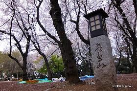 飛鳥山公園の吉宗が植えた桜。見頃は?|王子で花見