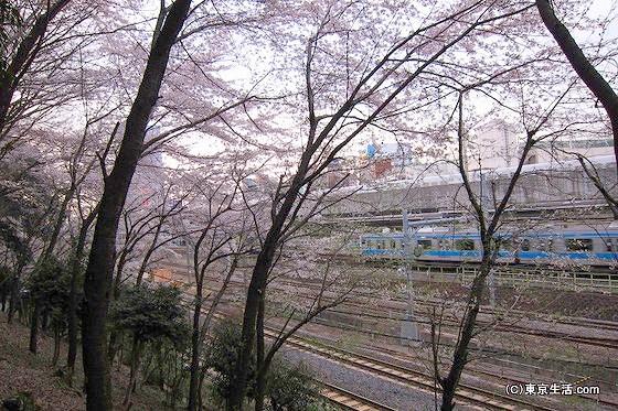 王子駅と桜