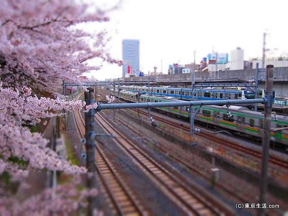 飛鳥山の桜と王子駅