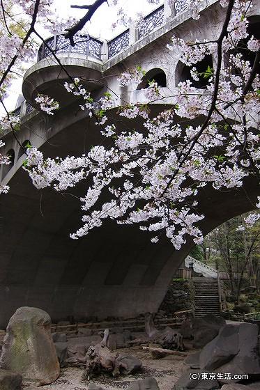 桜とのコントラスト
