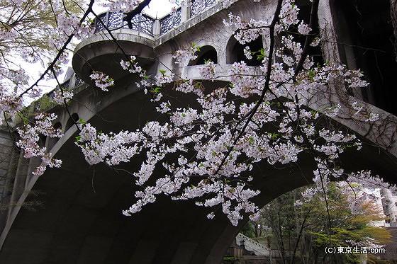 音無親水公園|王子にある桜&紅葉の穴場名所の公園の画像