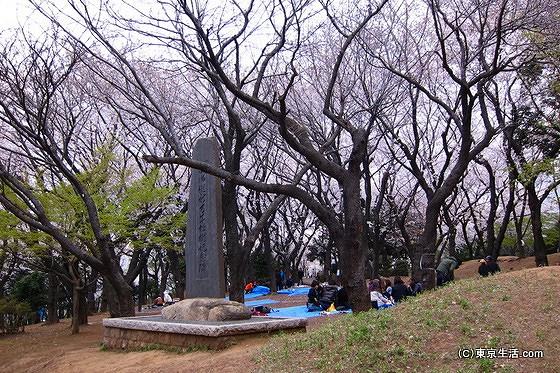 飛鳥山公園の桜の見頃は?