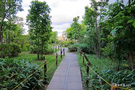 雑木林の丘