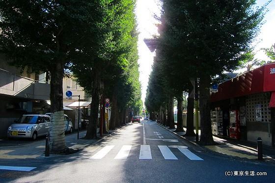 成城学園から伸びる並木道