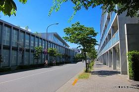 女子大生と安藤忠雄ストリート|仙川の散歩