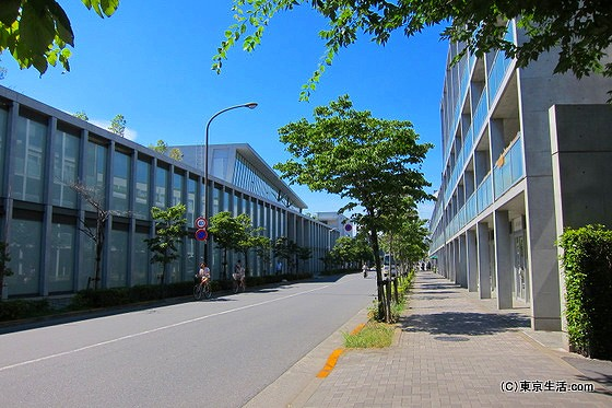 仙川の散歩|女子大生と安藤忠雄ストリートの画像