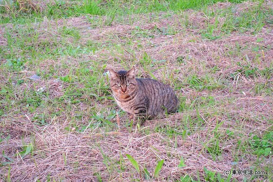 荒川の土手の猫
