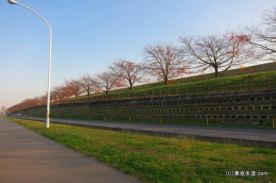 戸田公園の荒川堤防