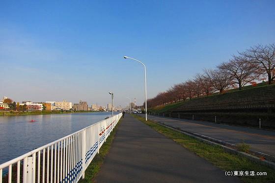 戸田漕艇場の堤防