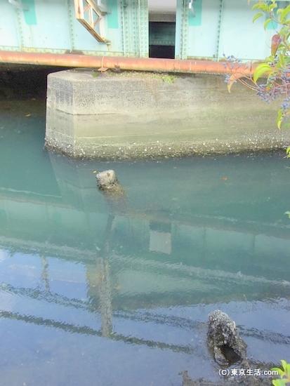 青い下水用水