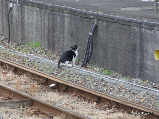 線路上のニャンコ
