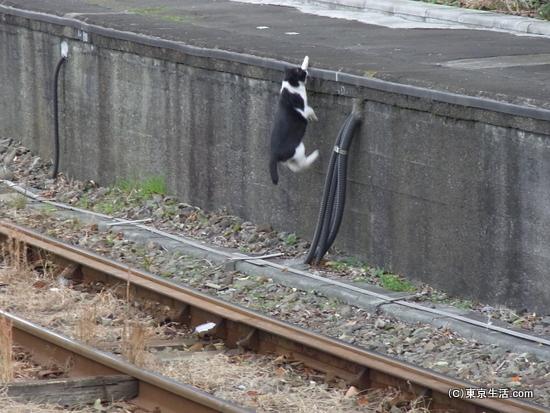 ジャンプするニャンコ