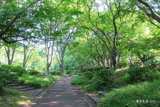 日比谷公園の木漏れ日